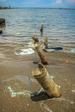 Bamboo wood on the beach. Sea stock photography