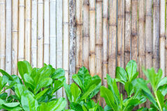 Bamboo wood fence background Royalty Free Stock Images
