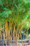 Bamboo wood green Royalty Free Stock Photography