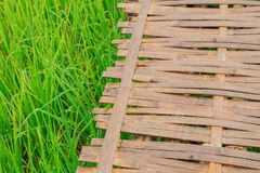 Bamboo wood with green jasmine rice field Stock Images
