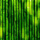 Bamboo wood. Green nature background royalty free stock photo