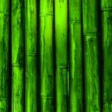 Bamboo wood. Green nature background stock photo