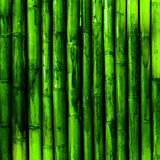 Bamboo wood. Green nature background stock photography