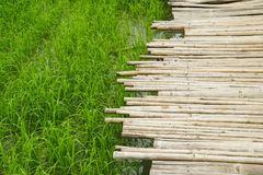 Bamboo wood path bridge cross pass over rice field. Bamboo wood path bridge cross pass over the rice field royalty free stock images