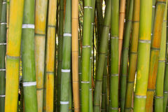 Bamboo wood texture royalty free stock photo