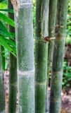 Bamboo wood in tropical forest. against blurry backgrounds Stock Images