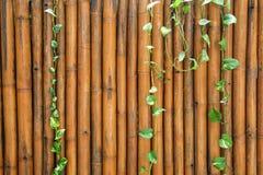 Bamboo wood wall Stock Photos