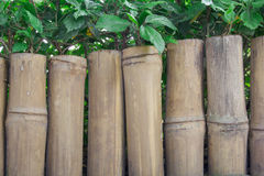 Bamboo wooden fence with green leaf Stock Image