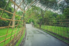 Bamboo wooden tunnel walkway at public park. Bamboo wooden tunnel walkway at public park in rainy day Stock Photography