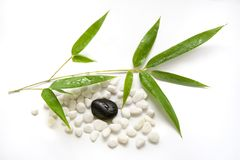 Bamboo zen. Fresh bamboo leaves with water drops and zen stones on white background stock photo