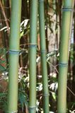 Bamboo zen. Details on a vertical format royalty free stock images