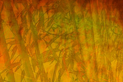 Bamboo zen abstract background. Grunge vintage zen bamboo green orange yellow natural abstract background jungle texture with autumn colors Royalty Free Stock Photography