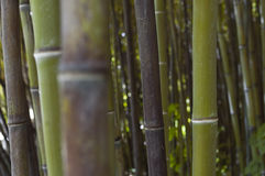 Bamboo zen forest Royalty Free Stock Photo