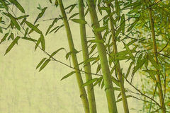 Bamboo zen textured natural background Stock Photos