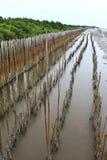 bambooes海滩美洲红树 免版税库存图片