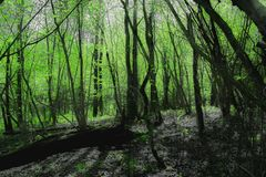 Bamboolike wiosny północny las obraz stock