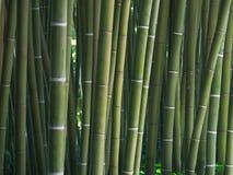 Bambooooo royalty-vrije stock afbeelding