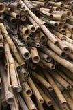 Bamboos Stock Image