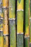 Bamboos Stock Images