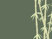 Bamboos Stock Photo