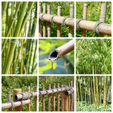 Bamboos collage Stock Images