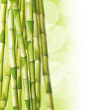 Bamboos, green background Royalty Free Stock Photo