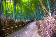 Bamboos of Japan Stock Photo