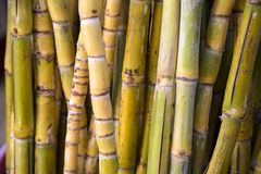 Bamboos on the market Royalty Free Stock Image