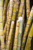 Bamboos on the market Stock Photography