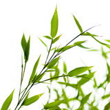 Bamboos over a white background Stock Photos