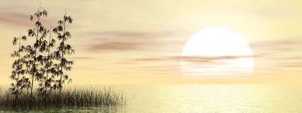 Bamboos by sunset - 3D render Royalty Free Stock Photo