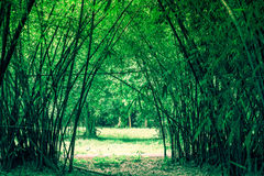 Bamboos tunnel at Waeruwan Garden in PhutthamonthonBuddhist park in Phutthamonthon district,Nakhon Pathom Province of Thailand. The bamboos from every regions of Royalty Free Stock Images