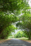 Bamboos tunnel at Waeruwan Garden in PhutthamonthonBuddhist park in Phutthamonthon district,Nakhon Pathom Province of Thailand. The bamboos from every regions of Royalty Free Stock Image
