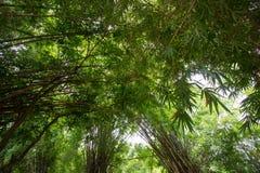 Bamboos at Waeruwan Garden in PhutthamonthonBuddhist park in Phutthamonthon district,Nakhon Pathom Province of Thailand Royalty Free Stock Image