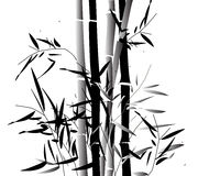 Bamboosa. Black and grey bamboo bush isolated on a white background Stock Image