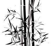 Bamboosa Stock Image