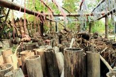 Bambou image libre de droits