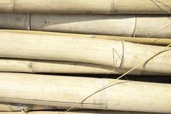 Bambou Photographie stock libre de droits