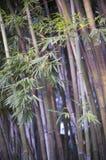 Bambou, ambiance tropicale de zen Images stock