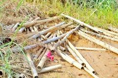 bambou après inondation Photographie stock libre de droits