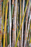 Bambou coloré Photographie stock