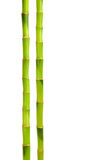 Bambou d'isolement sur le blanc Image stock