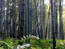 Bambou de ressort images stock