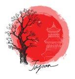 Bambou en soleil rouge Photographie stock
