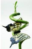 Bambou et guindineau verts Photo libre de droits