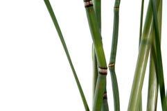 Bambou et queues de cheval Photo libre de droits