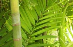 Bambou forrest Photographie stock libre de droits