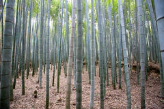 Bambou forrest Images stock