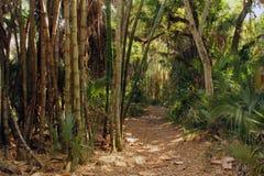 Bambou forrest Photos libres de droits