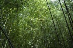 Bambou forrest Image libre de droits